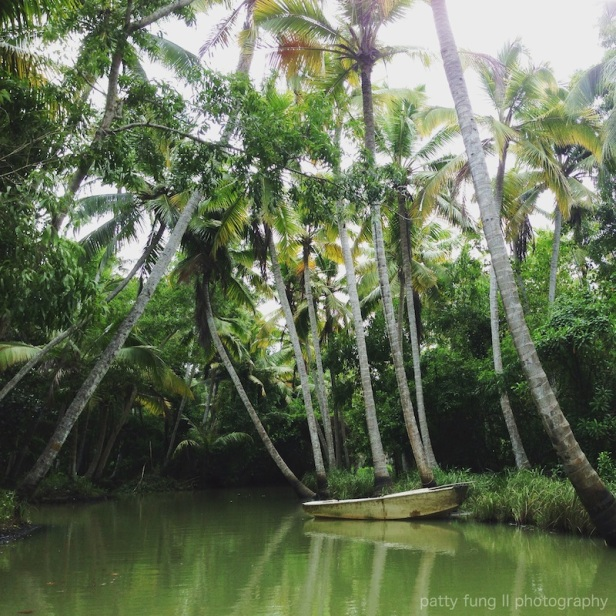 Boat Ride Through the Poovar Mangroves